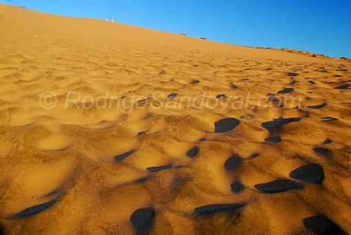 La formas que el viento esculpe en las dunas.